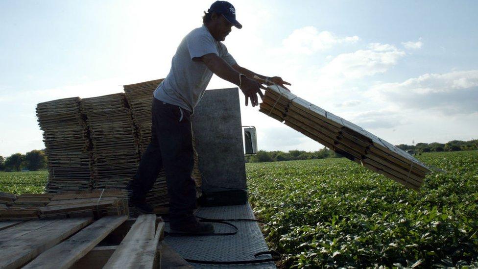 Un trabajador migrante en el estado de Florida en 2004.