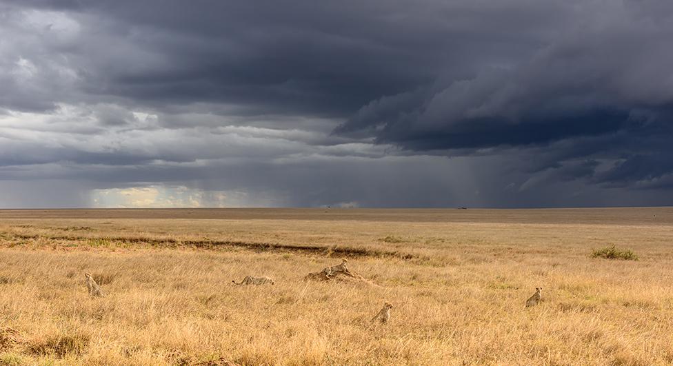 Gepardi čekaju oluju