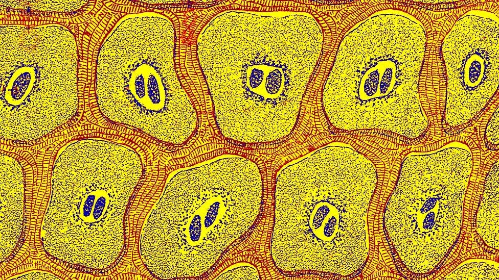 Dibujo de células