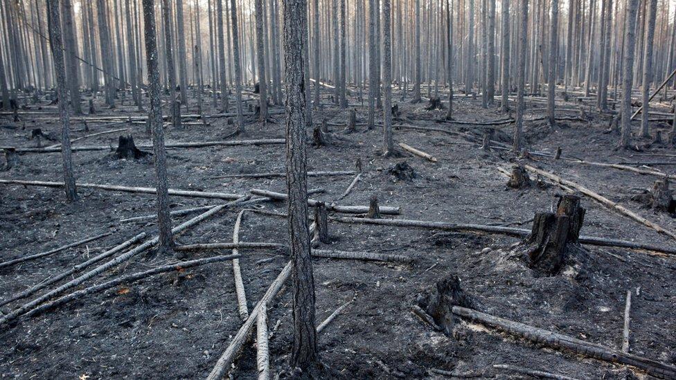 šuma u Švedskoj nakon požara