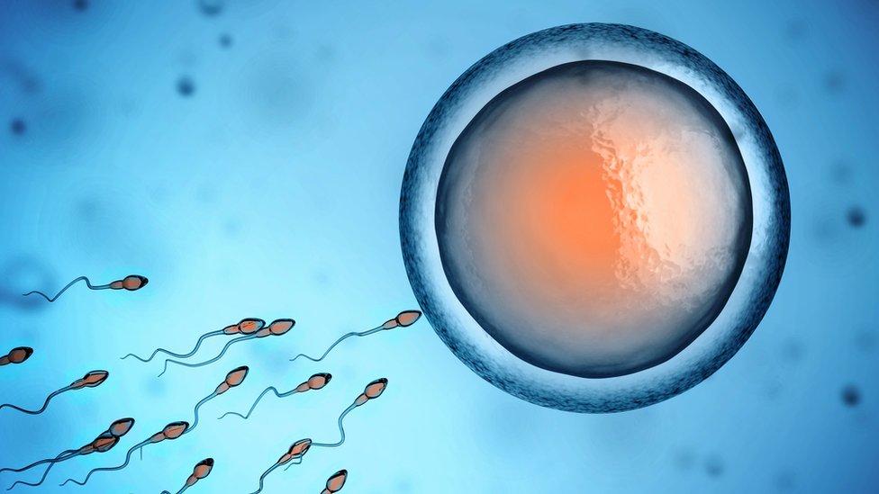Ilustración óvulo espermatozoides