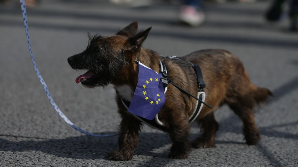 Brexit: Pet travel warning in no-deal planning papers