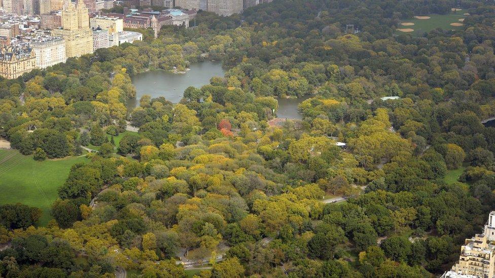 El Central Park visto desde el piso 75 del rascacielos 432 Park.