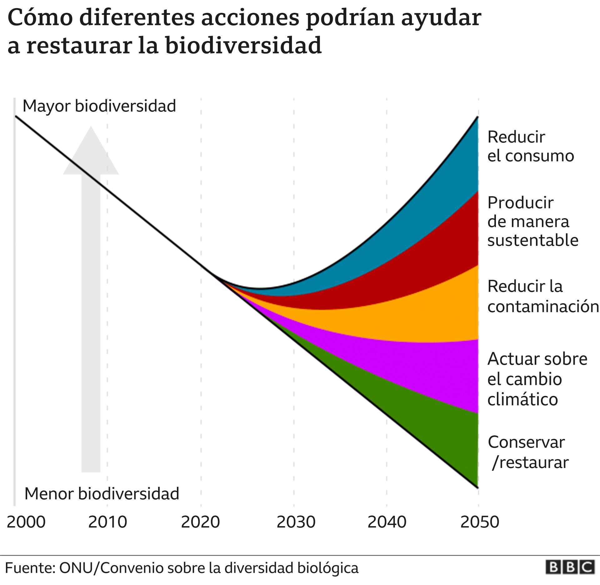 Cómo podemos ayudar a salvar la biodiversidad, gráfico.