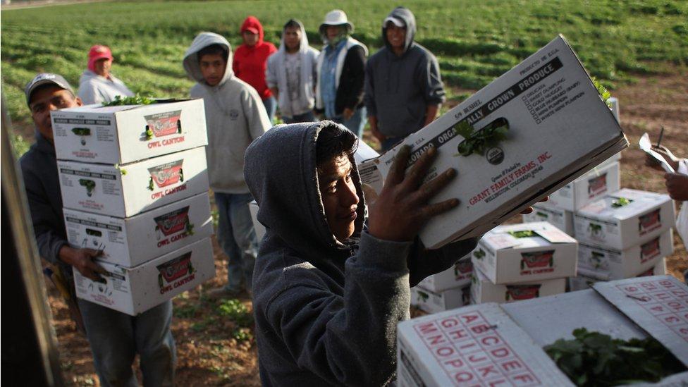 Trabajadores en una grangja de EE.UU.