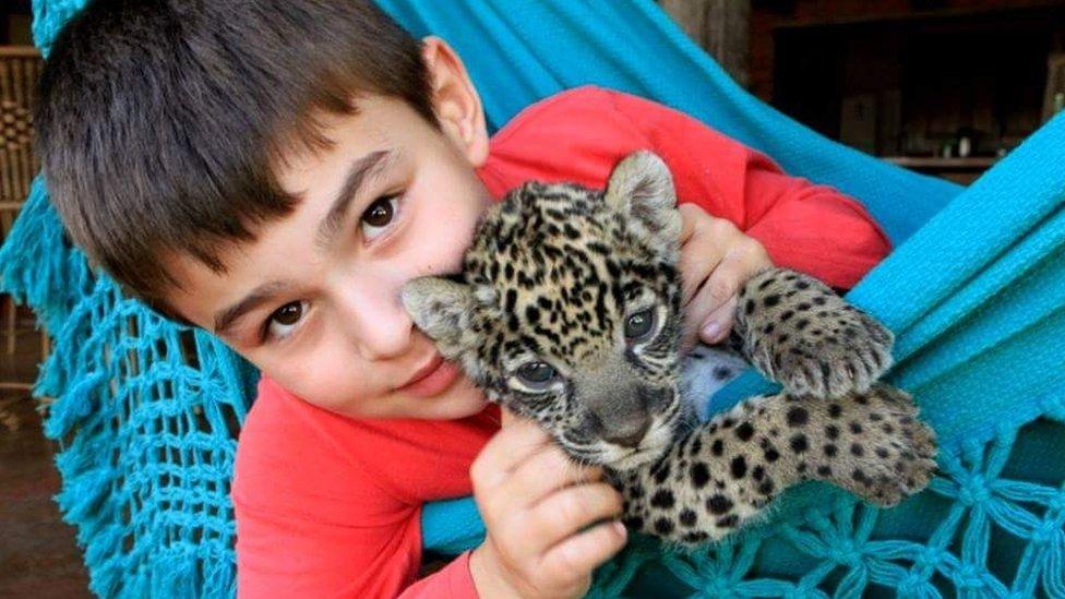 提戈與幼豹