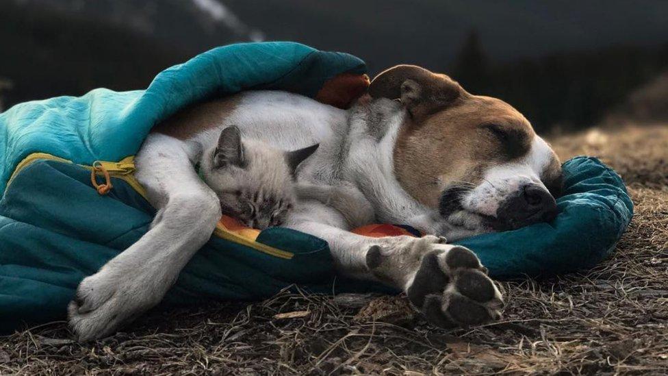 Las dos mascotas durmiendo juntas en una bolsa de dormir.