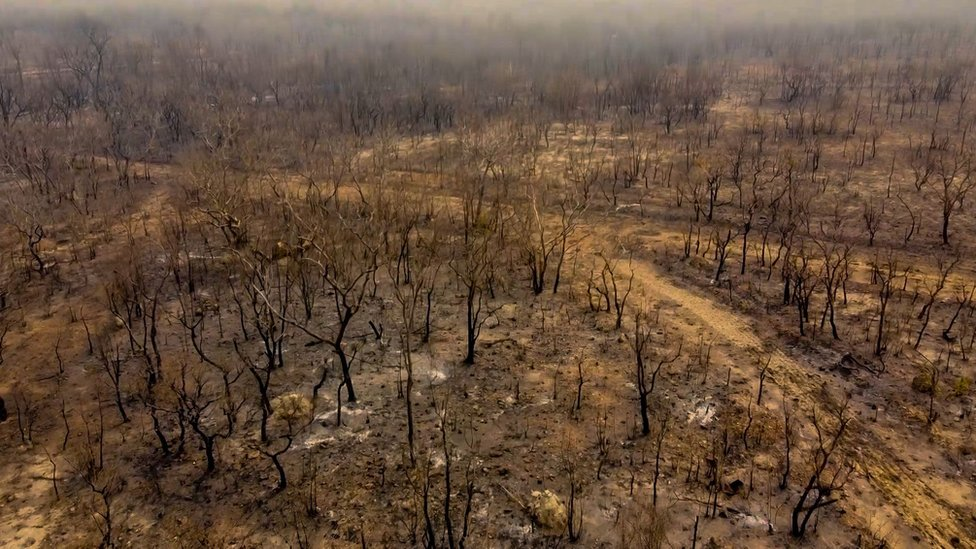 An aerial view showing a burnt and barren view of a forest