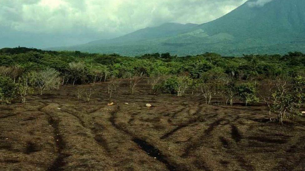 Seis meses después de ser arrojados, los desechos ya se habían descompuesto y fertilizado el suelo previamente árido.