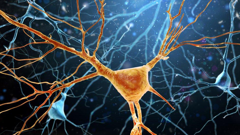 Ilustración de la estructura de una célula neuronal o nerviosa.