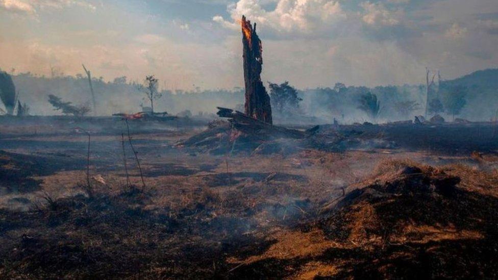 اندلاع النيران في منطقة بارا بالبرازيل في أغسطس/آب 2019