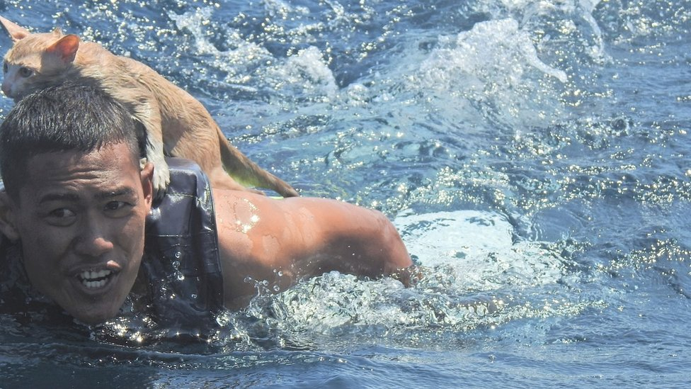 A Thai navy officer swims with a rescued cat on his back in the Andaman Sea March 2, 2021