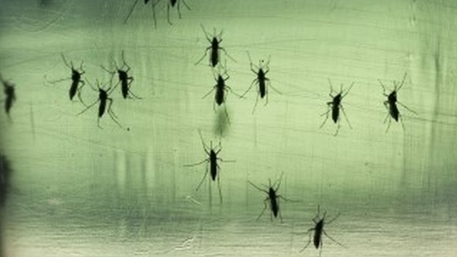 Mosquitoes - file image