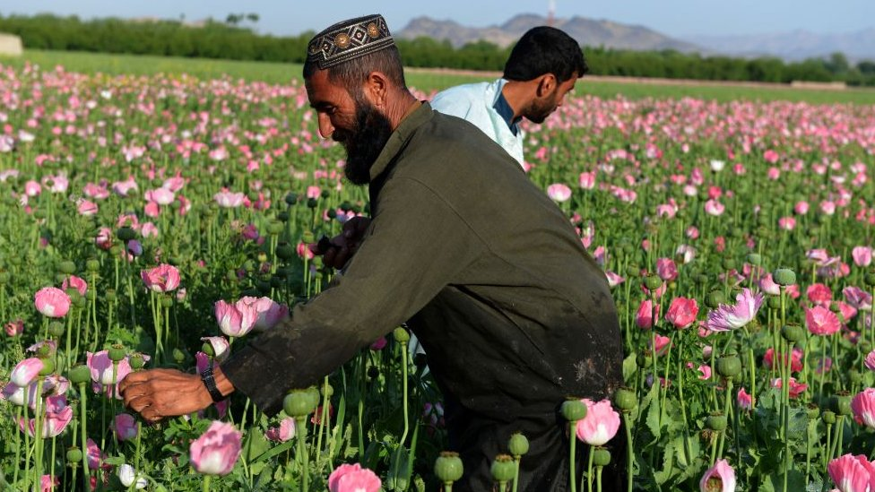 Afghanistan, opium