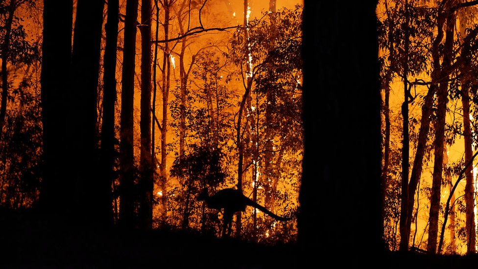 大多數動物都會試圖逃離火場,但它們需要回到歸屬地