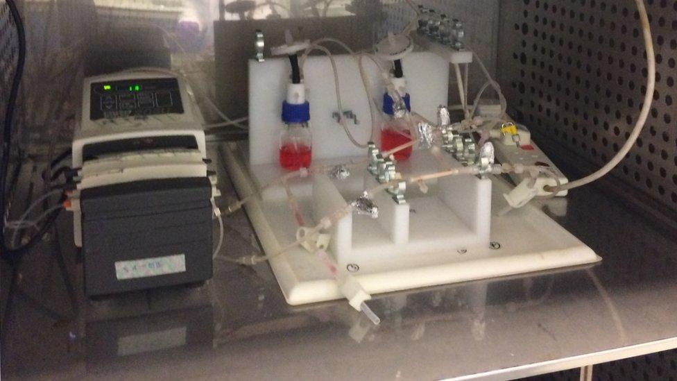 Biorreactor.