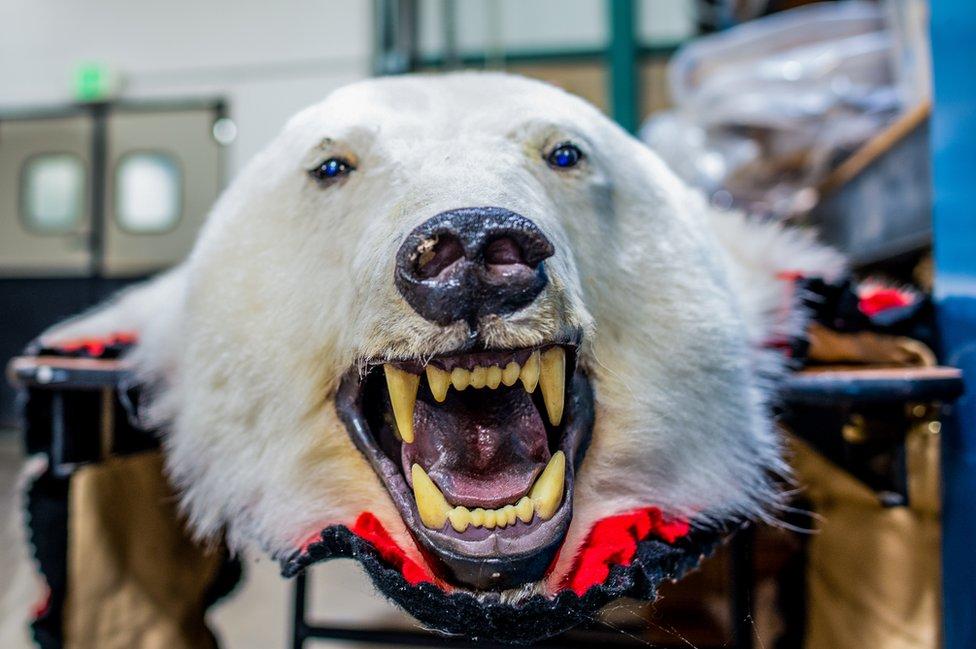 Tepih od belog medveda