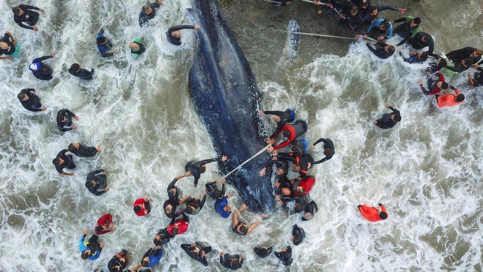 عدد من الرجال يحيطون بسمكة عظيمة في البحر