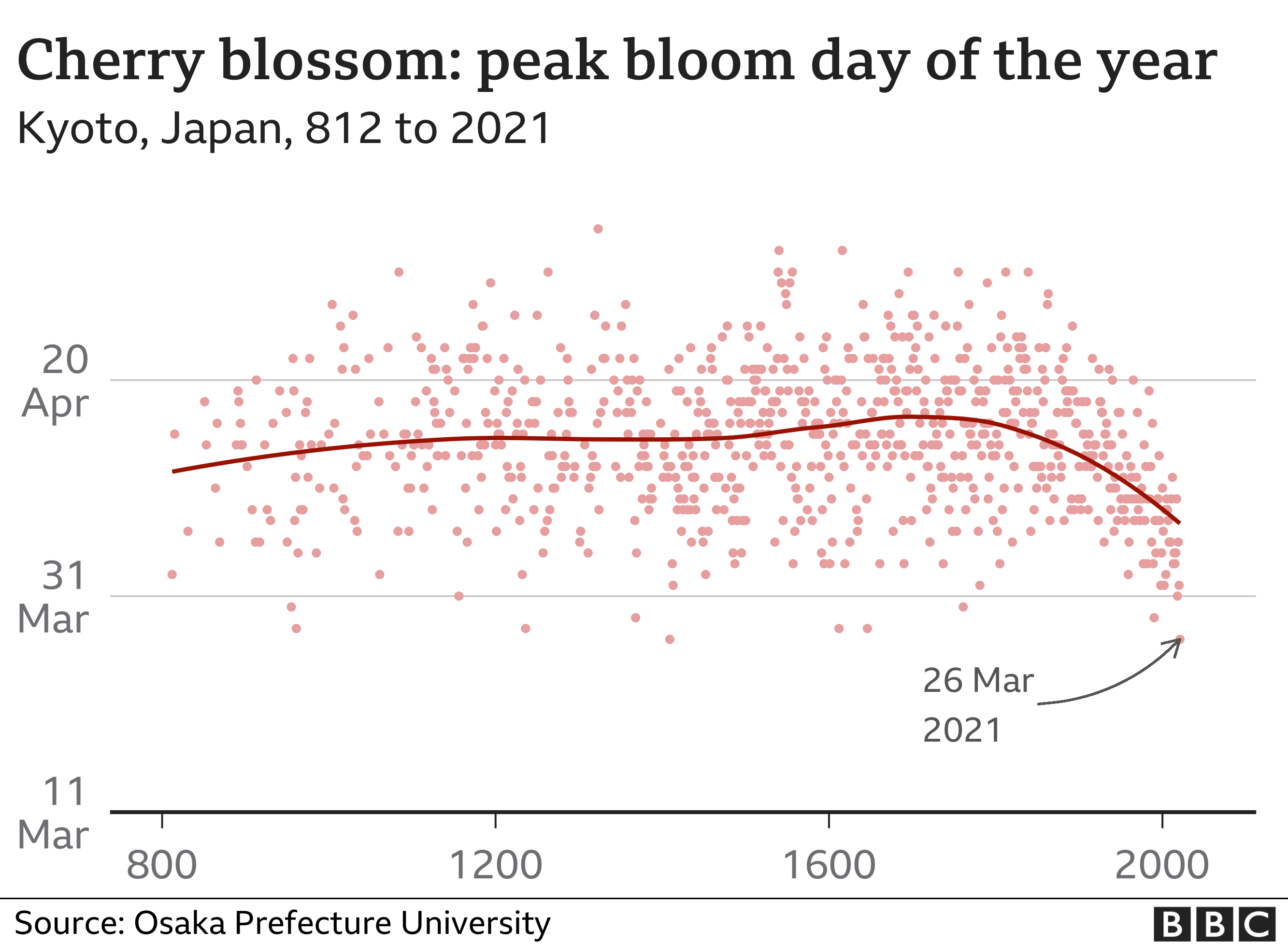 Graphic of peak cherry blossom day in Kyoto from 812 to 2021