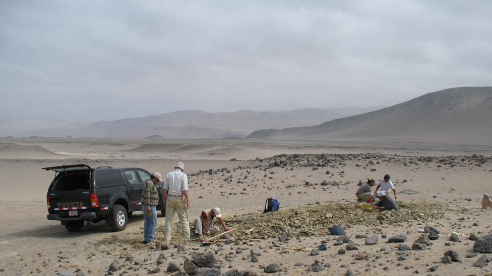 Paleontólogos trabajando en la zona desértica frente a la Playa Media Luna