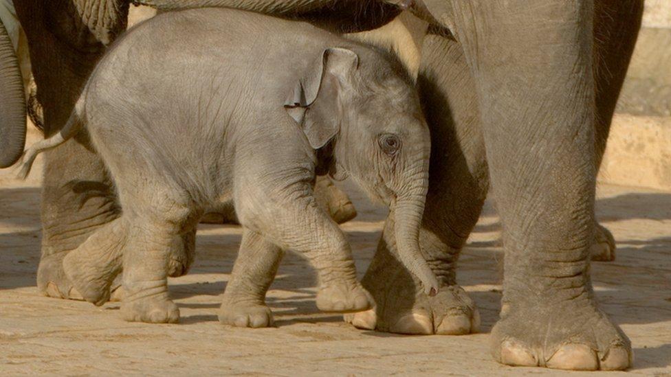 Elefante con cría.
