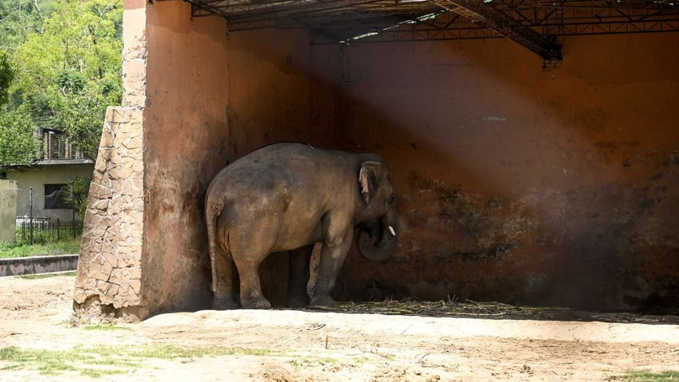 Kaavan stands under the cover of a shed at Marghazar Zoo in May