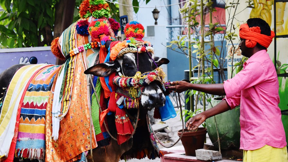 Vaca toda enfeitada ao lado de homem em rua da Índia