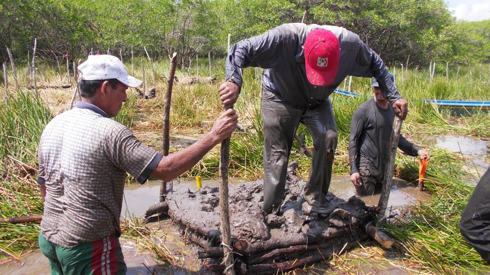 Hombres aplastando la tierra en una chinampa