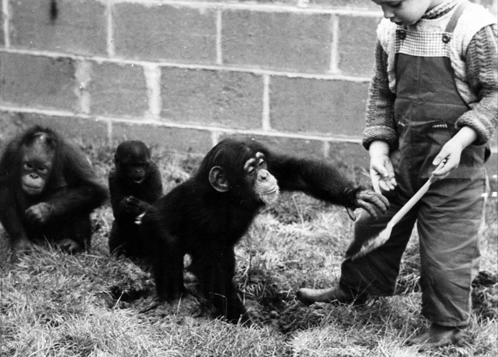 Un niño jugando con un chimpancé