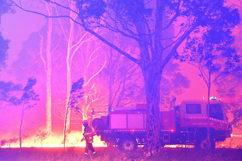 Firefighters hose down trees