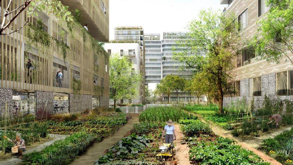 Proyecto de huerta en París