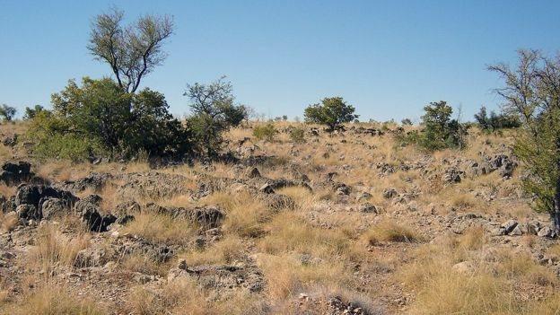 Paisaje de pastizales y arbustos en Riversleigh, Australia