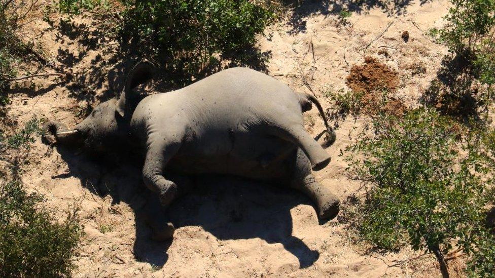 An elephant dead on his side