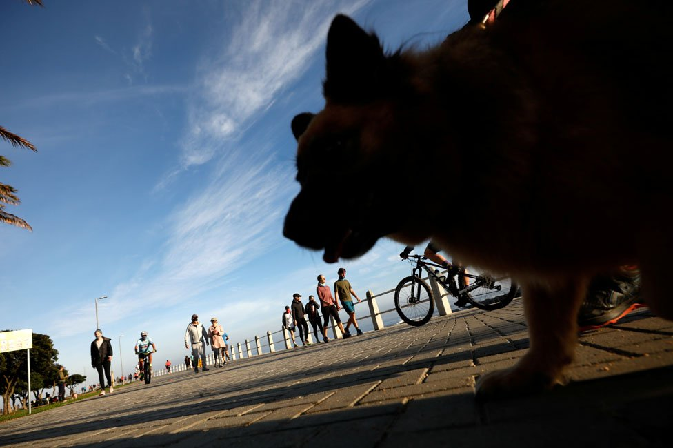 A dog in the foreground at the sea front