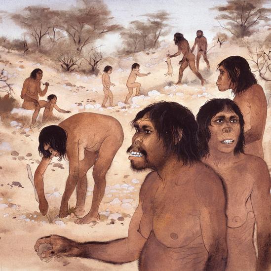 Comunidad de Homo habilis
