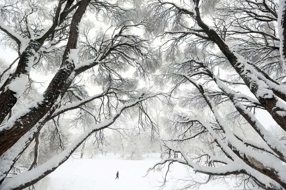Trees covered by thick layer of snow after a long snowfall in Kolomenskoye park in Moscow, Russia, 31 January 2018
