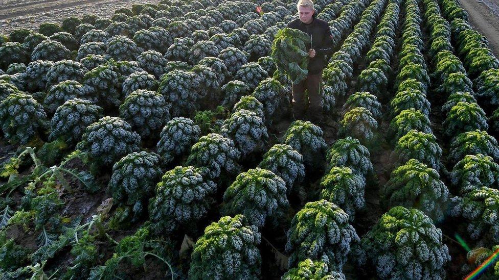 Granja de kale