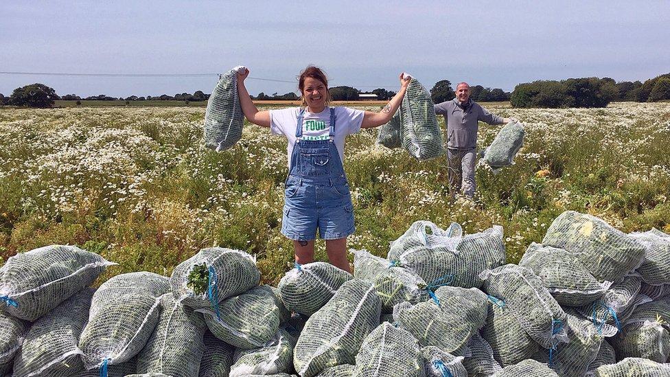 gleaners gathering brassica