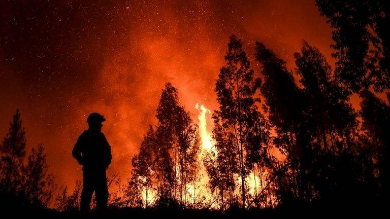 В Португалии бушуют лесные пожары. Фото