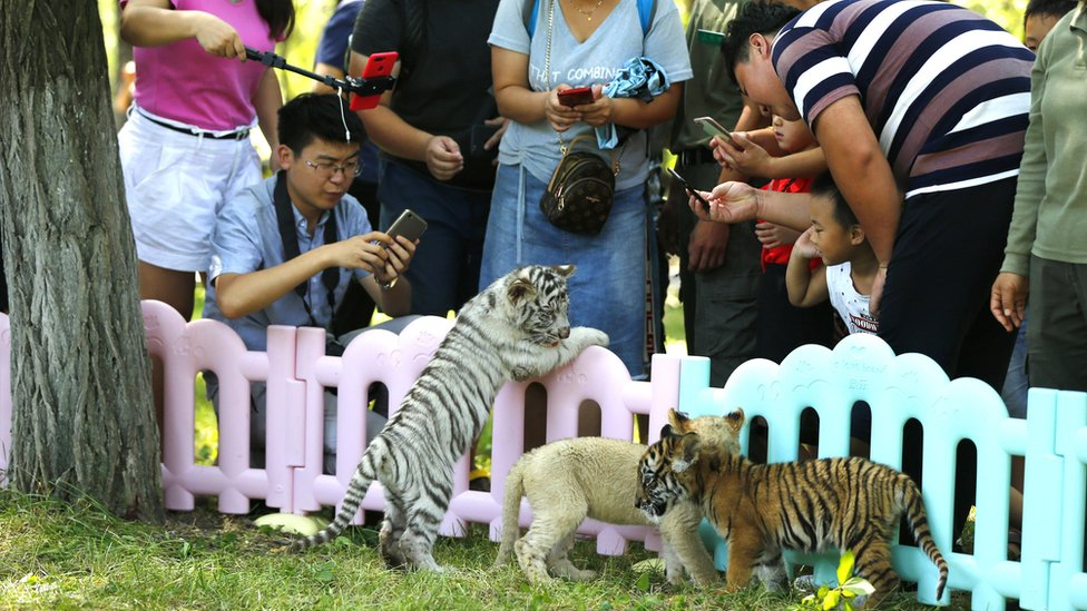 Visitors gather around the cubs to take photographs