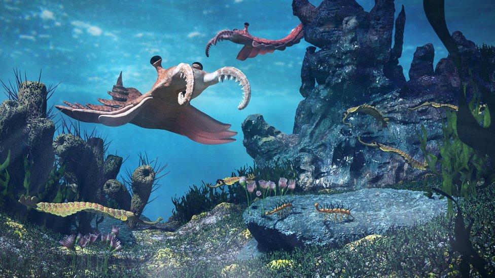 Ilustración hecha por científicos representando la vida hace más de 500 millones de años.