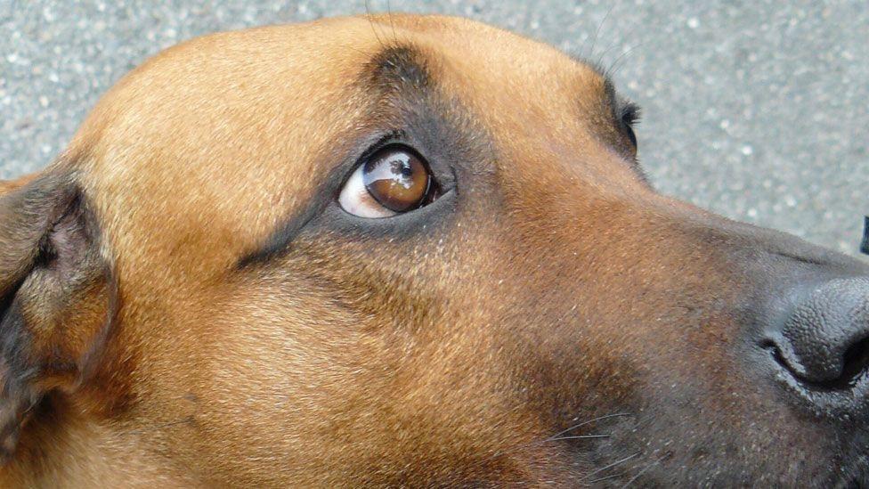 عندما تقوم الكلاب بتلك الحركة فإنها تثير رغبة قوية لدى البشر في الاهتمام بهم