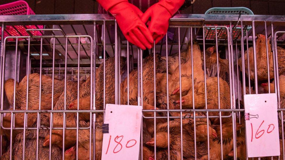 Chickens at a Hong Kong food market