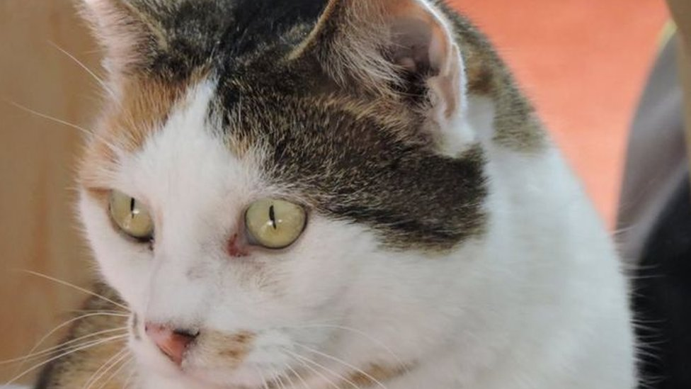 Британська поліція розкрила таємницю котячого вбивці