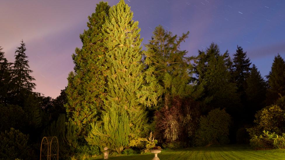David McCabe's Spruce, Crieff
