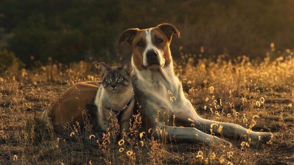El gato y el perro sentados sobre hierba.
