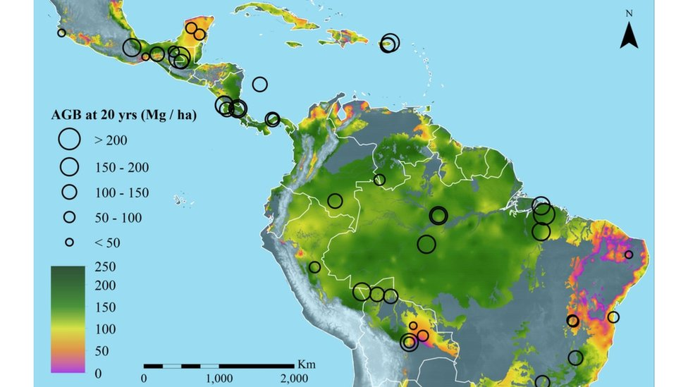 Map showing above-ground biomass (ABG) growth (Image: Nature journal)