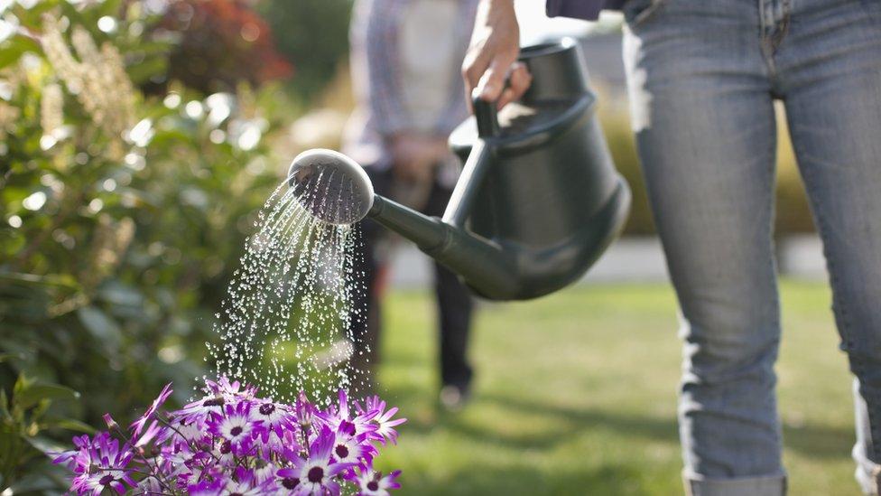 regadera sobre planta de flores