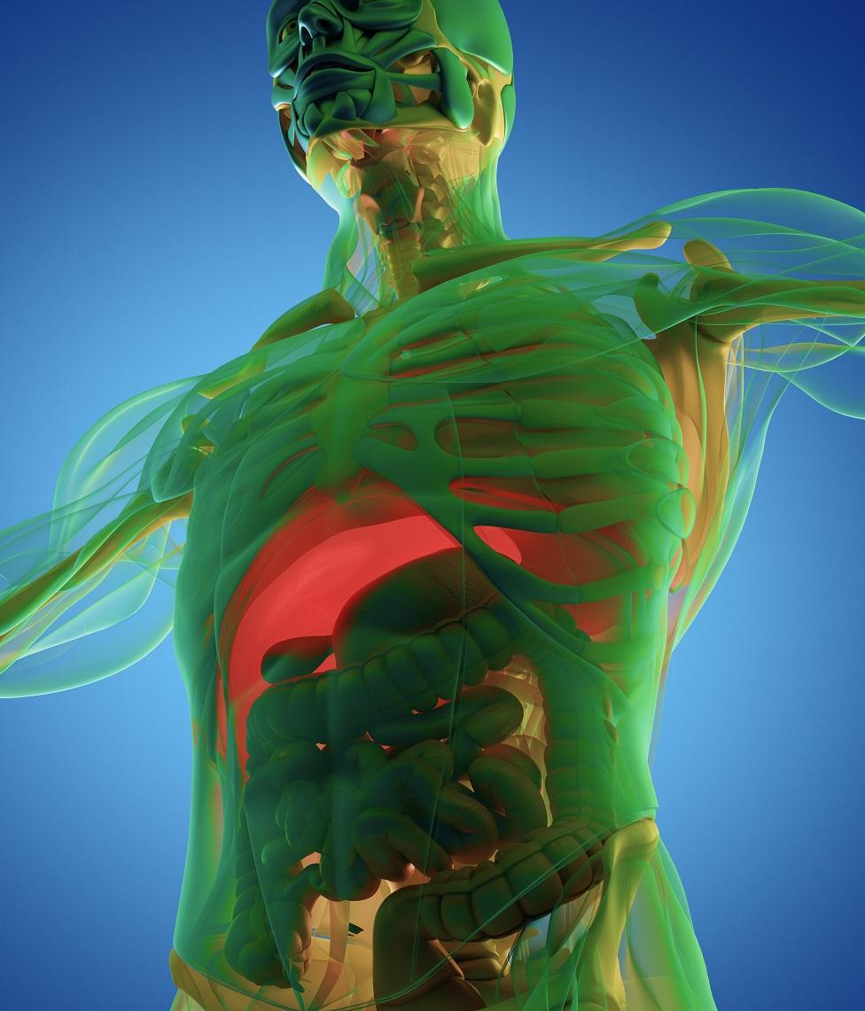 صورة مجسمة لجسم الإنسان