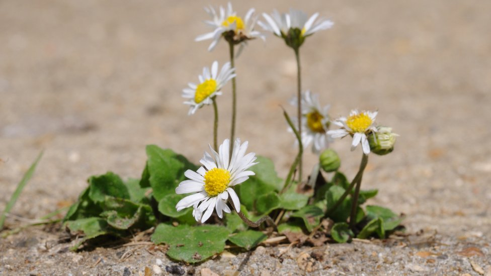 Even a flower in a crack in paving can lift spirits